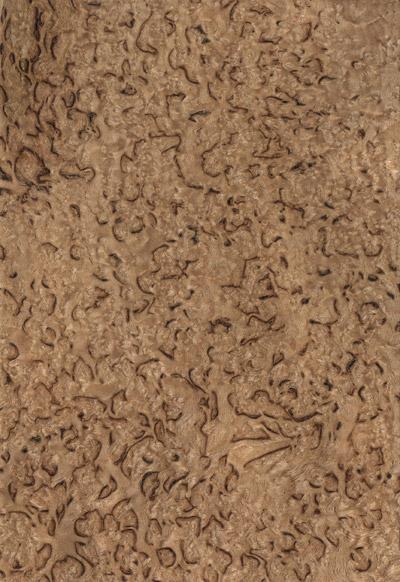 Betulla  - Ghiacciato